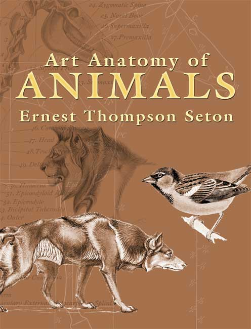 Art Anatomy of Animals by Ernest Seton-Thompson